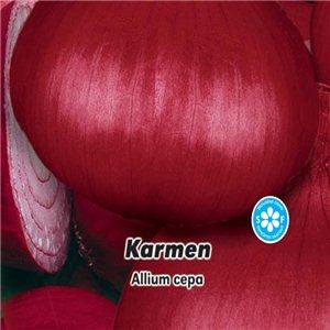 Cibuľa jarná červená - Karmen - semená 2 g