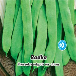 Fazol keříčkový - zelenoluský - Radka - 20 g semen