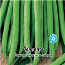 Fazol tyčkový - Zelenoluský - Belmonte 1, - semena 5 g