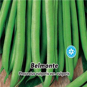 Fazuľa kolíkový - Zelenoluský - Belmonte 1, - semená 5 g
