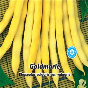 Fazuľa záhradná kolíkový - Goldmarie 1, - semená 5 g