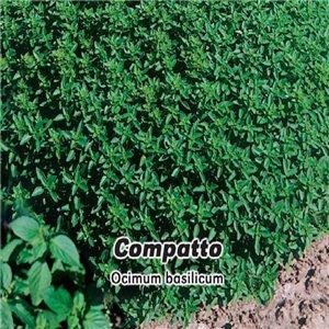 Bazalka pravá Ohře  - (Ocimum basilicum) semena 0,4 g