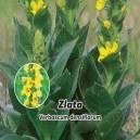 Divizna velkokvětá - Zlata semen 0,2 g