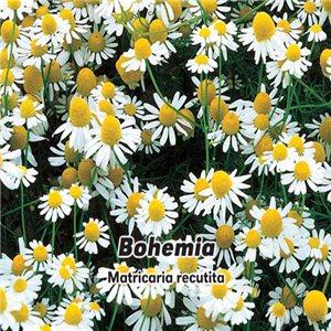 Harmanček pravý - (bylina: Matricaria recutita) semená 0,2 g