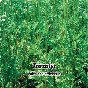 Kozlík lekársky - (bylina: Valeriana officinalis L.) semená 0,2 g