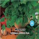 Ligurček lekársky - semená 0,5 g