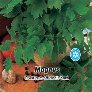 Ligurček lekársky - (bylina: Levisticum officinale) semená 0,5 g