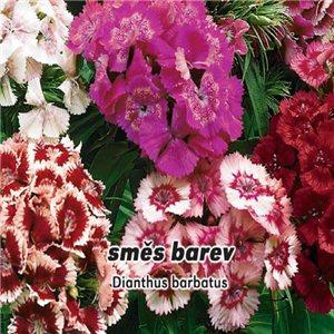 Hvozdník bradatý plnokvetý - zmes farieb (kvetina: Dianthus barbatus) 0,5 g osiva klinčeka