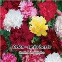 Hvozdík Karafiát - Orion  - semena 0,5 g
