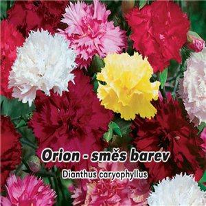 Hvozdník karafiát - Orion - směs barev ( Dianthus caryophyllus ) 0,5g osiva hvozdíku