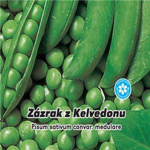 Hrach siaty Zázrak z Kelvedonu 2 - (zelenina: Pisum sativum) semená 5 g