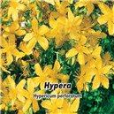 Ľubovník bodkovaný (bylina: Hypericum perforatum) - semená 0,2 g