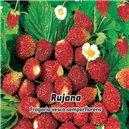 Jahodník mesačný - Rujana - semená 0,2 g