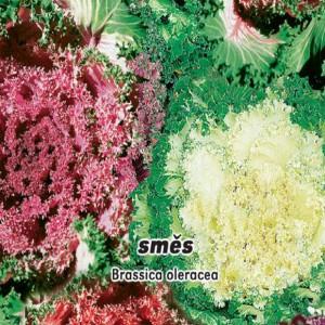 Kapusta - okrasná směs ( rostlina: Brassica oleracea ) - semena 0,4 g