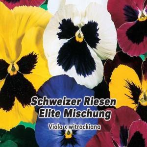 Sirôtka záhradná - (kvetina: Viola × wittrockiana) semená 0,2 g