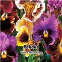 Maceška zahradní - Rokoko - semena 0,2 g