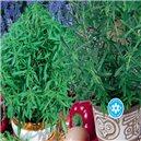 Zmes viacročných aromatických rastlina na balkón - semená 0,5 g