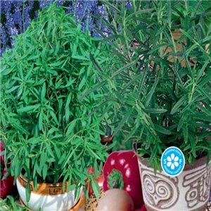 Směs víceletých aromatických rostlin na balkon - semena 0,5 g