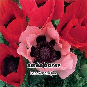 Mak východný - (rastlina: Papaver orientale) semená 0,2 g