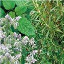 Zmes viacročných aromatických rastlín - na záhon - semená 0,5 g