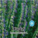 Yzop lékařský - Blankyt - semena 0,2 g