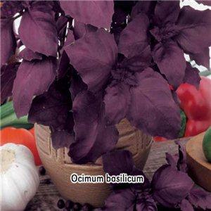 Bazalka červená - (Ocimum basilicum) - semená 0,4 g