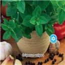 Pamajorán obyčajný - semená 0,2 g