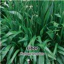 Skorocel - Libor - semená 1 g