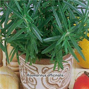 Rozmarín lekársky - (Rosmarinus officinalis) - semená 0,1 g