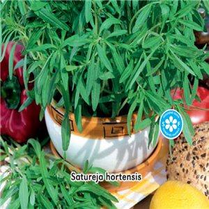 Saturejka Záhradné - (Satureja hortensis) - semená 0,3 g