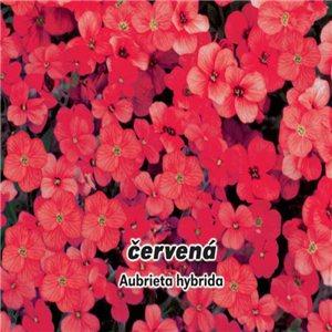 Tařička Zahradní - Červená ( Aubrieta hybrida )semena 0,1 g