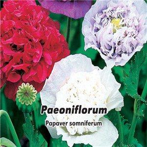 Mak plnokvetá - (rastlina: Paeoniflorum Mix) - semená 1 g