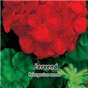 Pelargonie Paška F1 - Červená - semená 10 ks
