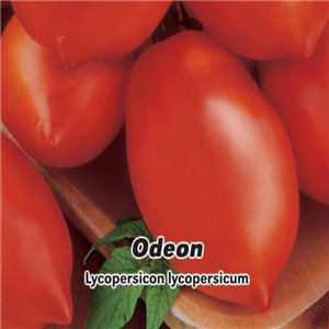 Rajčiak kríčkový - Odeon - (Lycopersicon esculentum Mill) semená 0,2 g