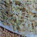Klíčky - Fazuľa - Bio klíčky - semená 50 g