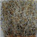 Klíčky - Vojtěška Bio klíčky semena 50 g