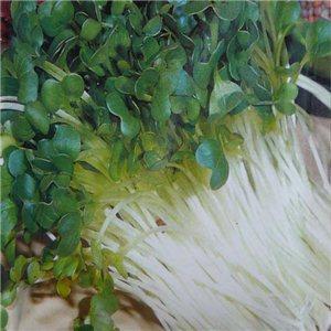 Zdravé klíčky - Reďkovka - Bio klíčky - semená 40 g