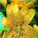 Lilie - Citronella - cibule 1