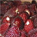 Kukurica Jahodová 2 - 5 ks semien