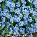 Nezábudka lesná-Indigo - semená 0,2 g