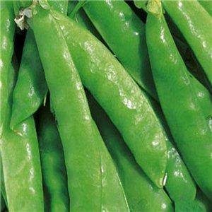 Hrach siaty cukrový-kolíkový (Pisum sativum)-Carouby semená 20 g