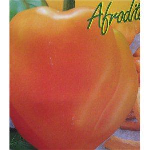 Paprika zeleninová-Afrodita (Capsicum annuum) 3 - 5 ks semien