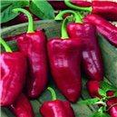 Paprika zeleninová-kapie-Parade - semená 0,3 g