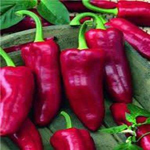 Paprika zeleninová-kapie-Parade - (Capsicum Annuun) semená 0,3 g