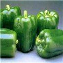 Paprika poloskorá-California Wonder - semená 60 ks