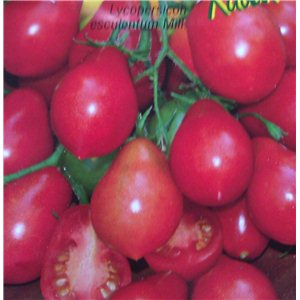 Rajčiak kolíkový-hruškovité-Radana (Lycopersicon esculentum) - semená 40 ks