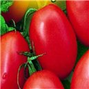 Rajče keříčkové-Salus - semena 0,6 g
