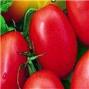 Rajčiak kríčkový-Salus - semená 0,6 g