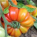 Rajče tyčkové-obří-Costoluto genovese - semena 30 ks