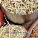Pískovice grécka seno 1, - semená 5 g
